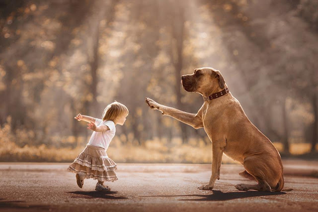 Incredible bond between big dogs and small children