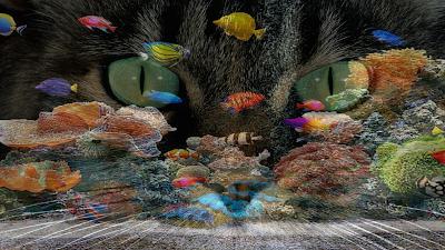 Gato e Peixes coloridos FHD 2