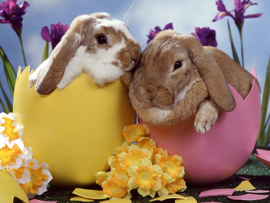 Image gallary 5 beautiful happy easter wallpapers for desktop - Easter bunny wallpaper ...
