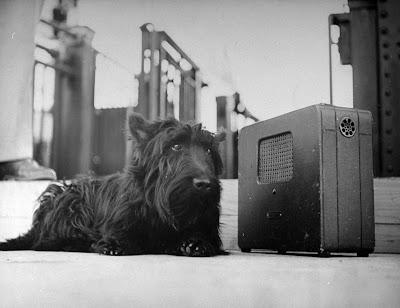 Fala - President Roosevelt's dog