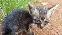 Islam Melarang Kita Menyiksa Hewan Kucing