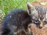 Larangan Menyiksa Kucing dan Hewan Lainnya Menurut Islam.