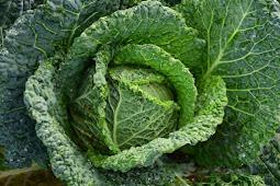 Manfaat Tersembunyi Sayur Kol Bagi Kesehatan Tubuh