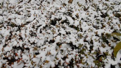 垣根に降り積もった雪