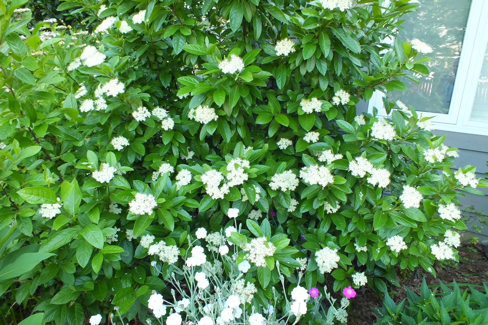 Gene's Garden: Summer arrives
