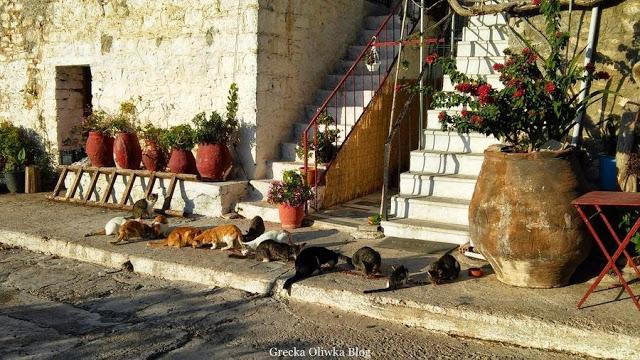 greckie koty,  koty jedzą pokarm, koty w Grecji, koty obok greckich dzbanów