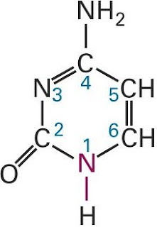 Cytosine Structure