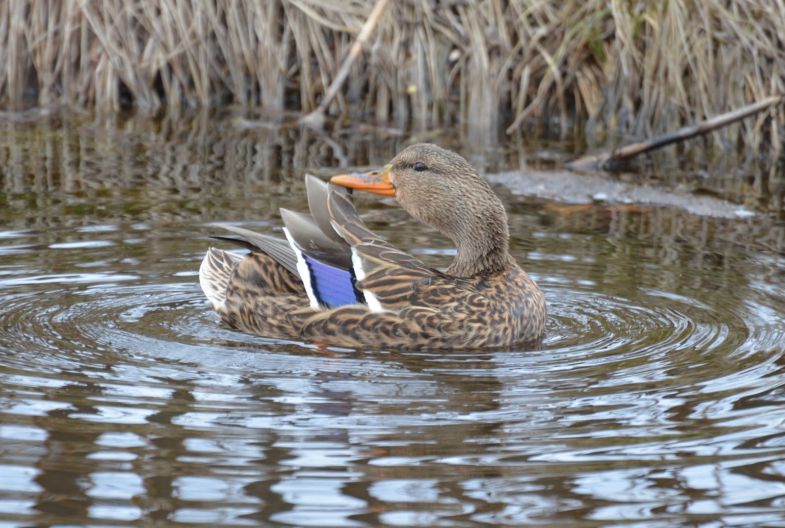 Official Anaheim Ducks Website