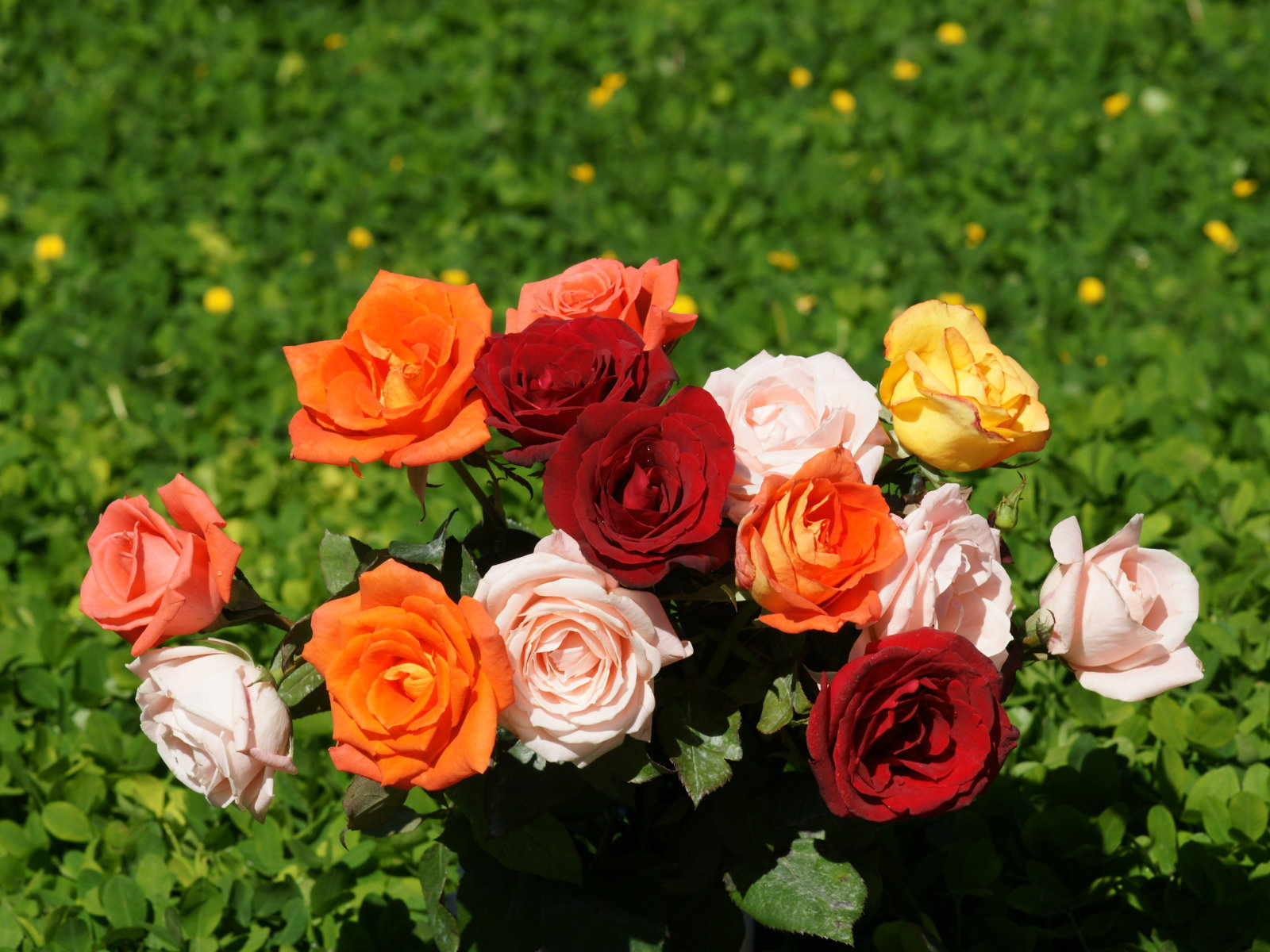Wedding Flowers: Red & Yellow Roses For Desktop Background
