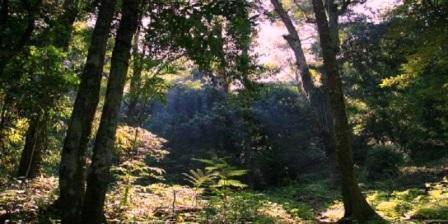 taman nasional gunung palung ketapang taman nasional gunung palung ketapang kalimantan barat