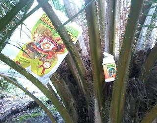 jenis pupuk kelapa sawit, kelapa sawit, pupuk kelapa sawit, pupukorganik sawit, pupuk sawit, pupuk sawit organik, tata cara pemupukan kelapa sawit