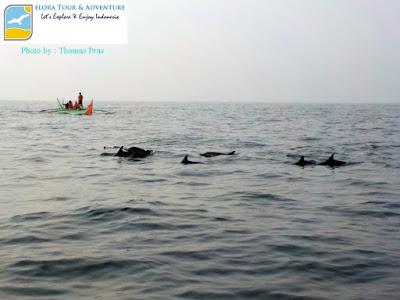 dolphin-tour-teluk-kiluan