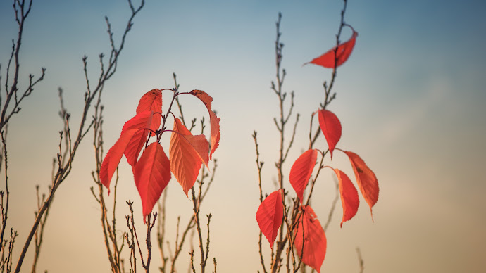 Wallpaper: Nature. Fall. Autumn. Branches. Leaves