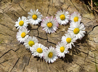 Daisy chain in a heart shape on a tree stump