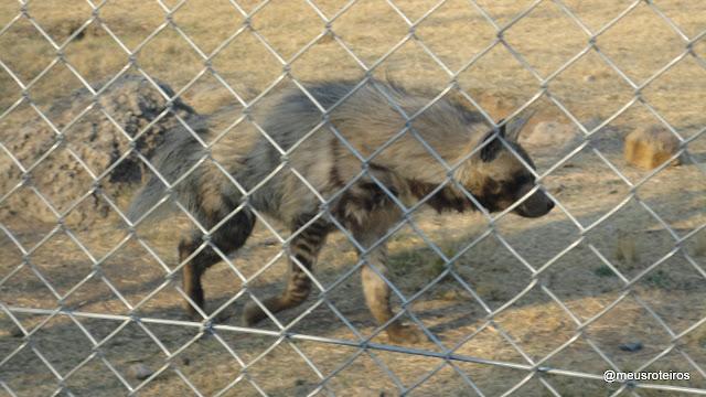 Hiena no Lion Park - Joanesburgo