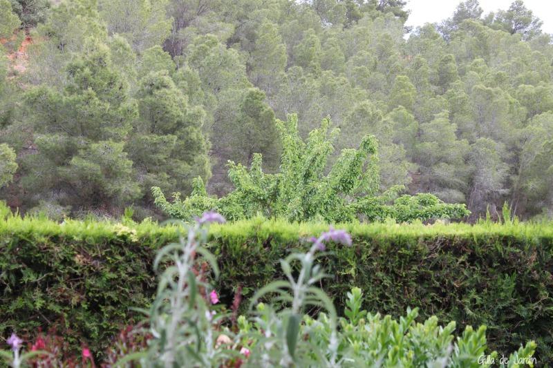 Vistas del fantástico monte de pinos que hay frente al jardín