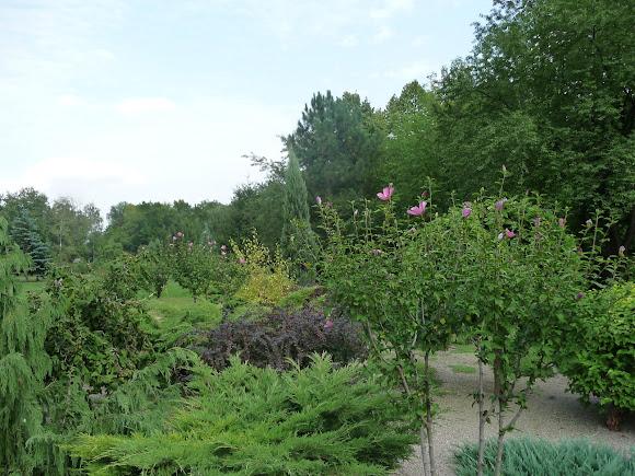 Донецк. Ботанический сад. Дендрарий