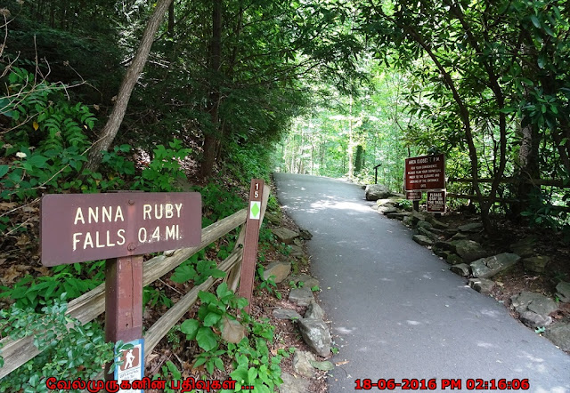 Anna Ruby Falls Trail Georgia