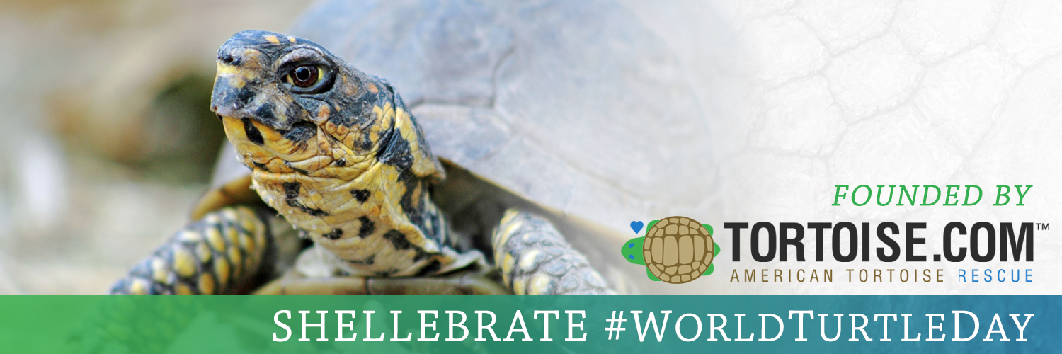 Celebrate World Turtle Day (5/23) with Henry and