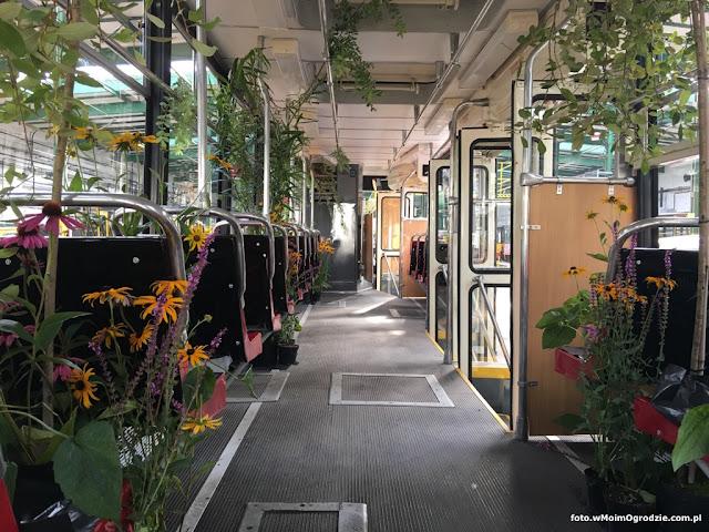 tramwaj z kwiatami