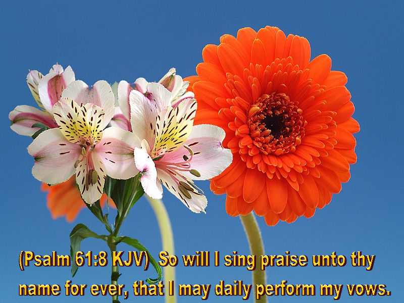 flower blossom wallpaper scripture - photo #44