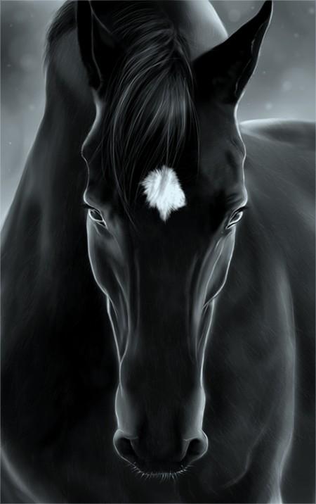 Las Fotos Mas Alucinantes: caballo negro - photo#45