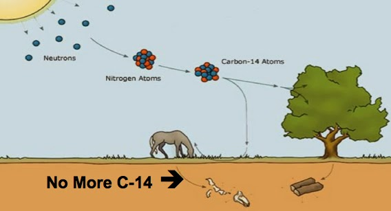 why carbon 14 is not used for dating dinosaur bones cartoon