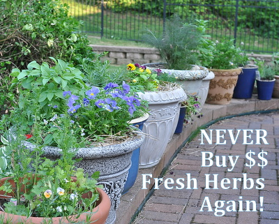 Never Buy Fresh Herbs Again, a DIY challenge ♥ AVeggieVenture.com, how to grow fresh herbs in pots to save money and inspire summer meals.