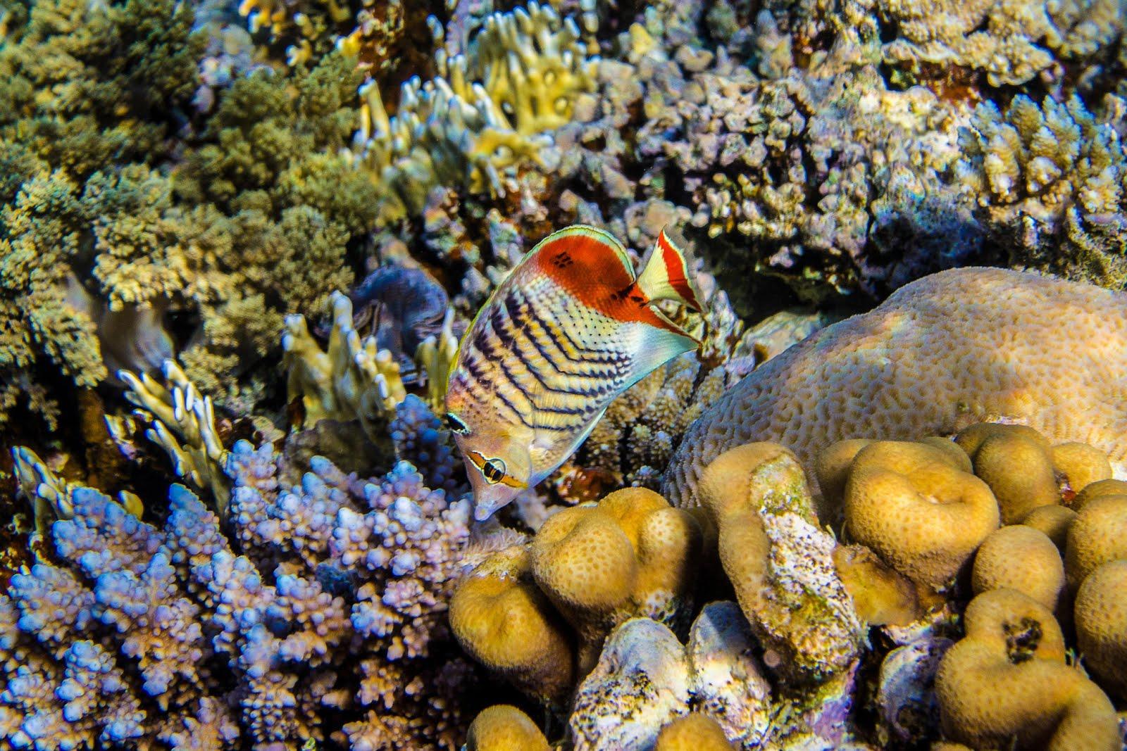 <In Eritrea, a Diver&#039;s Dreamscape