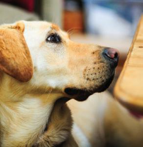 exercícios para cães com lesões