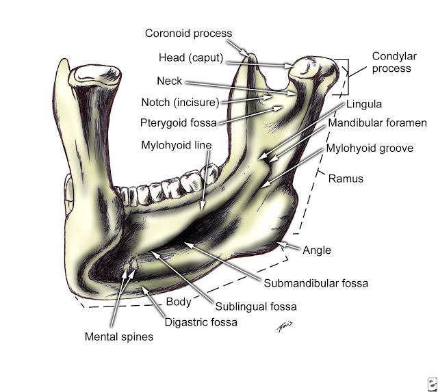 Technology And Techniques In Radiology Mandible
