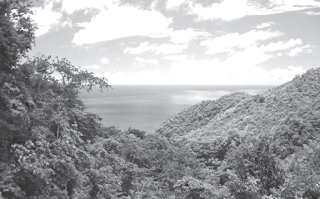 Bioma hutan hujan tropis ini, di dalamnya terdapat individu, populasi, komunitas, dan ekosistem.