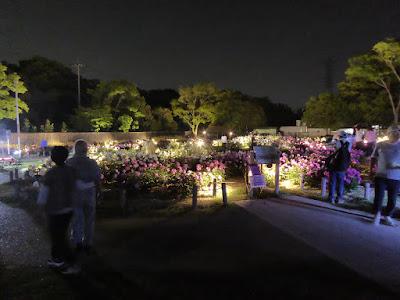 久宝寺緑地 シャクヤク園のライトアップ