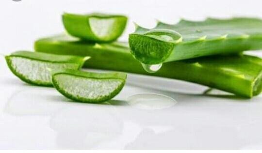 Ragam Khasiat dan manfaat lidah buaya dalam dunia kesehatan, kecantikan dan pengobatan herbal