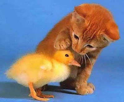 Cute Animals Cute Photos-Images 2012 - Pets Cute and Docile