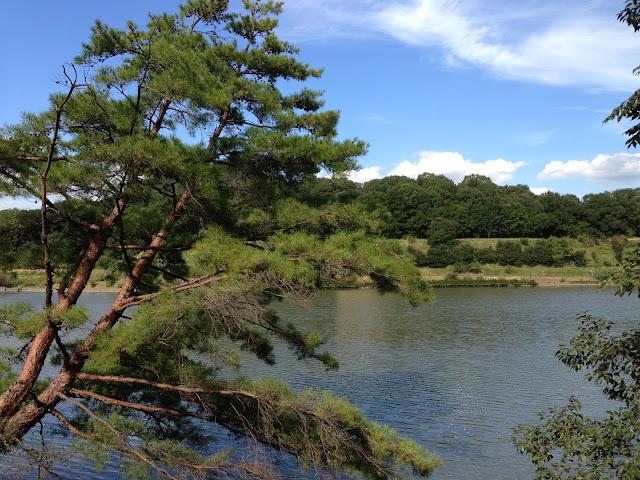 イメージ画像:公園風景写真