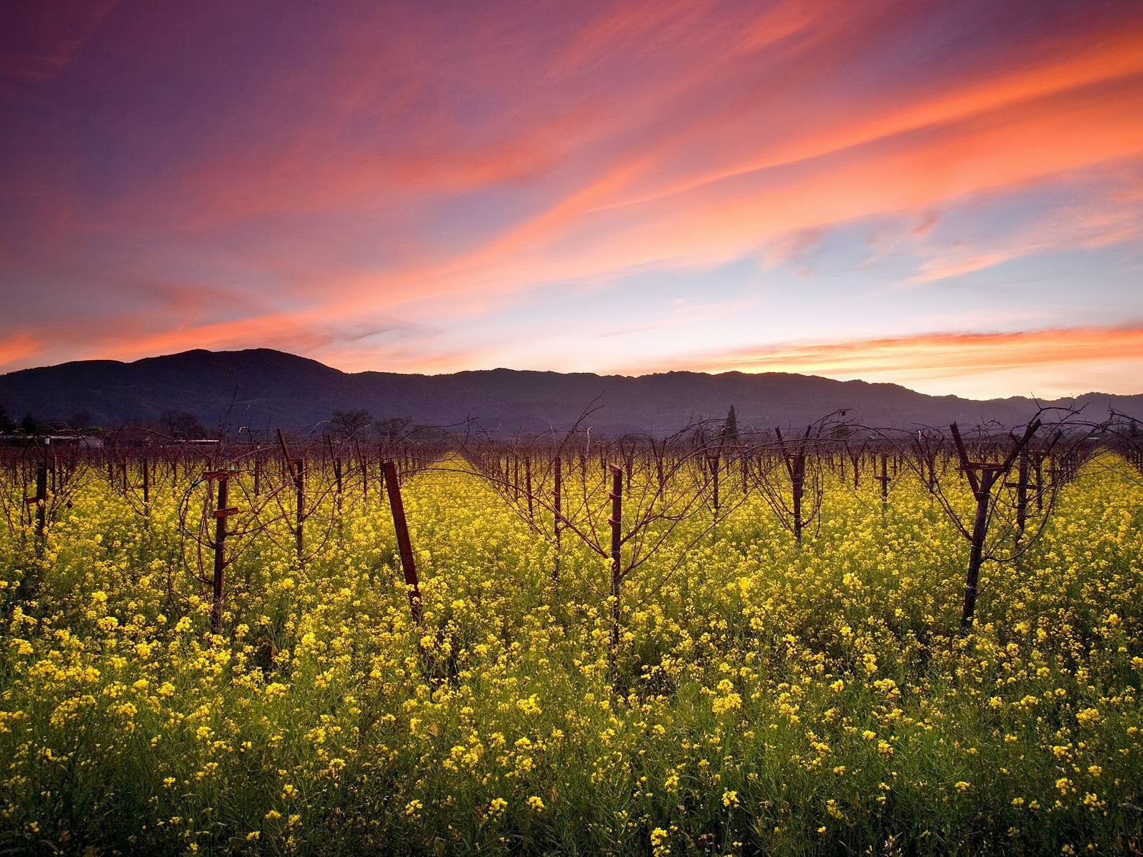 best napa valley limo wine tours service