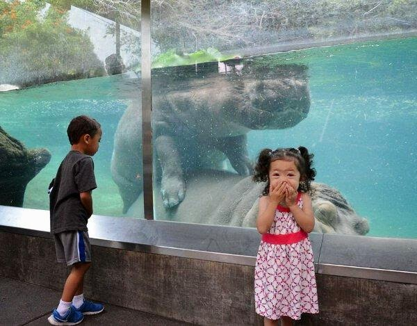 Funny Hippo Mating Zoo Girl Joke Picture