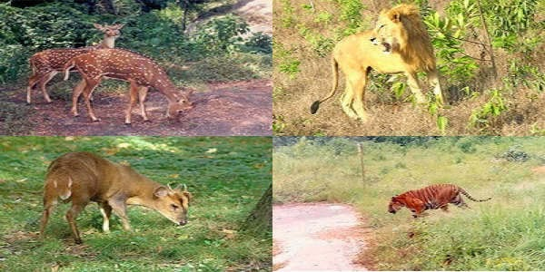 Images of Safari Park Cox's Bazar