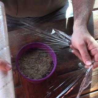 Guia completa para el cultivo de la manzanilla - 4