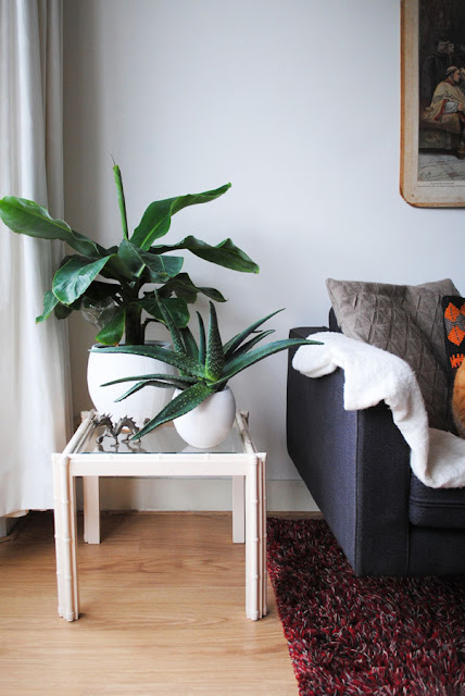 Een bananenplant en een Aloë Vera staan in ronde witte potten op een klein tafeltje met glazen blad.
