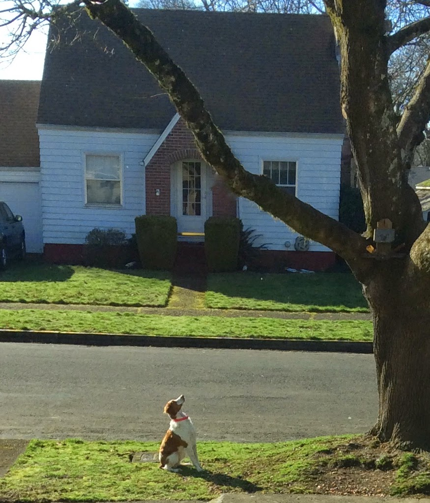 Dog looking up at a squirrel in a tree