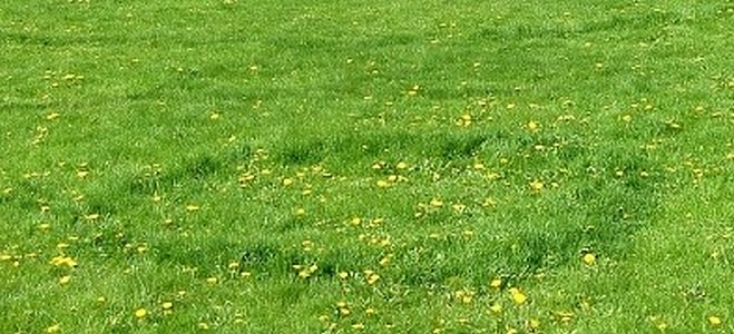 Garden And Yard How To Get Rid Of Fairy Rings In Your Lawn