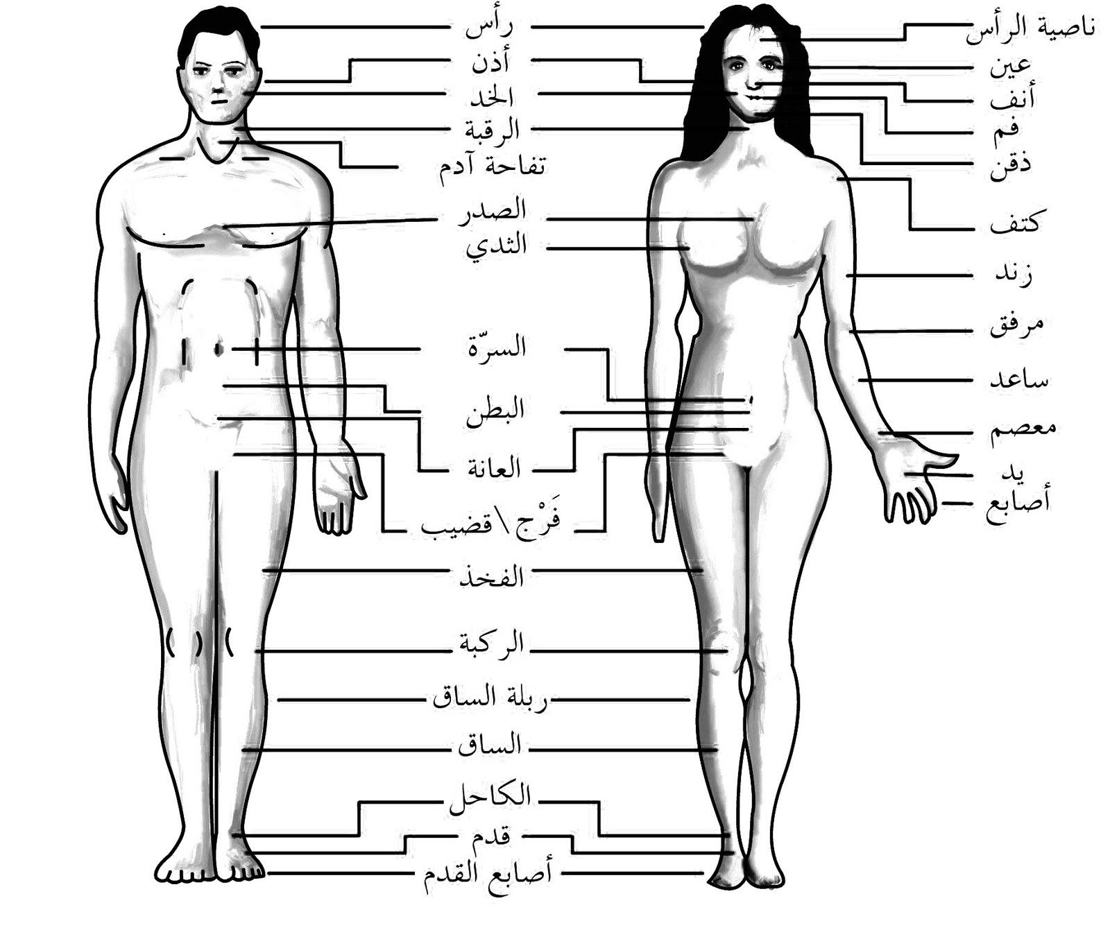 7612174f1 Arabic Vocabulary - Human Body | Learn Arabic تعلم العربية