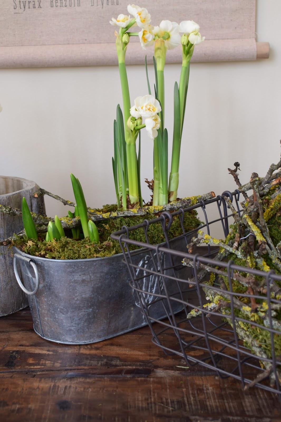 Frühlingsdeko selbermachen basteln mit Narzissen Krokusse Bridal Crown Deko für den Frühling natürlich Frühlingsblüher Moos Zweige