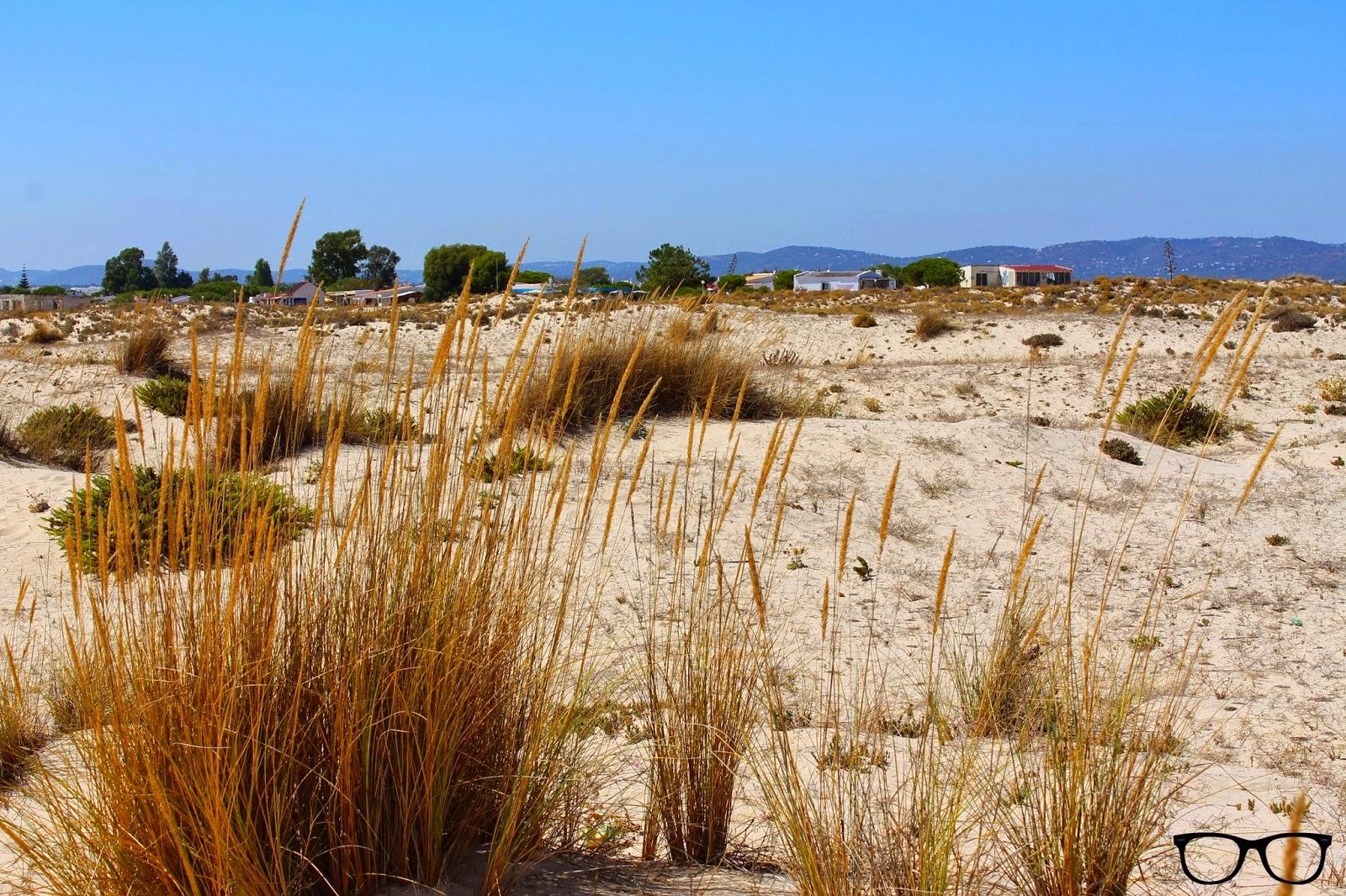 Playa Isla de Armona