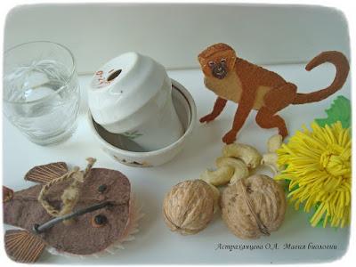 КОАПП_почему в одуванчике молоко_магия биологии, ореховое молоко