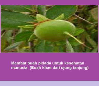 Manfaat buah pidada untuk kesehatan manusia  (Buah khas dari ujung tanjung)