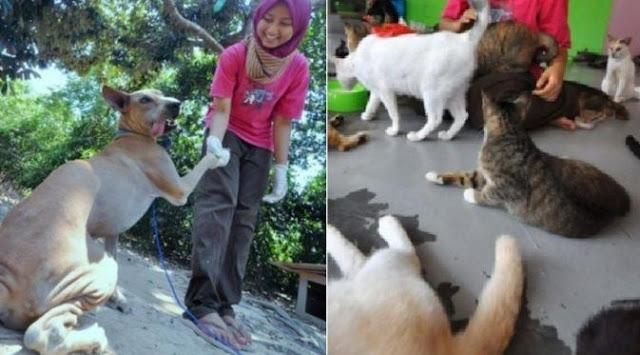 Kisah Gadis Berhijab yang Merawat 30 Anjing dan 100 Kucing