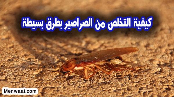 وصفة سحرية للتخلص من الصراصير